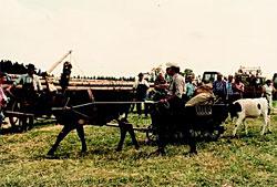 Gerhard Renz mit seiner Kuh