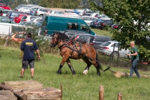 Bergfest 2015 - Holzrückwettbewerb