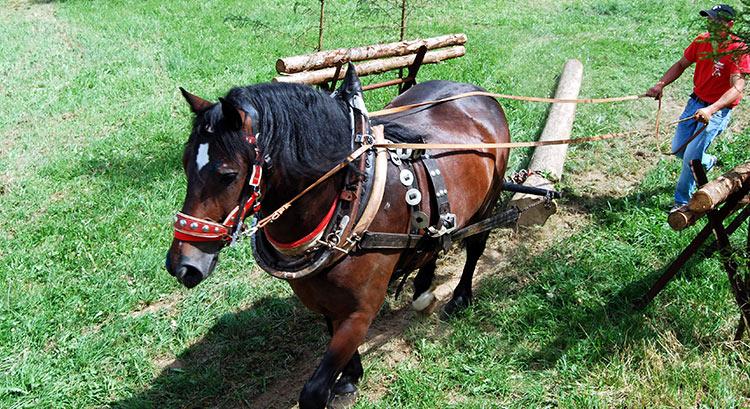 Samstag ist Pferdetag